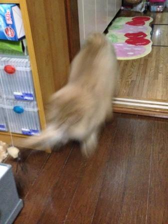 高飛び込み (3)