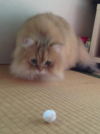 ティッシュボール (2)