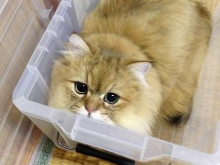 やっぱり箱がすき (2)