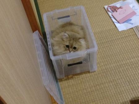 やっぱり箱がすき