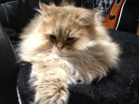 寝起きのレオン
