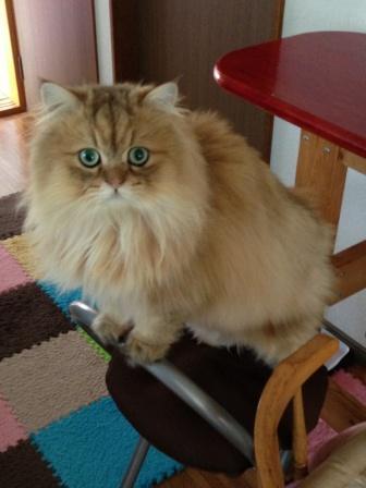 レオンの椅子立ち