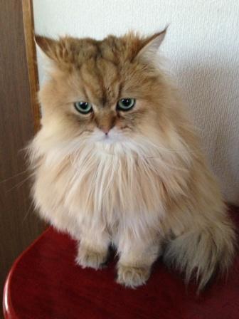 置物猫 (4)