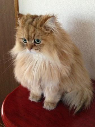 置物猫 (3)
