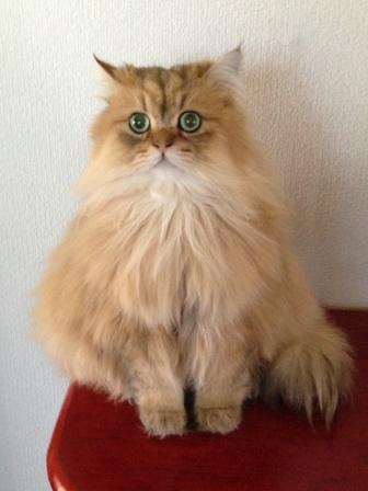 置物猫 (2)