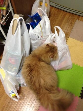 何買ってきたですか (2)