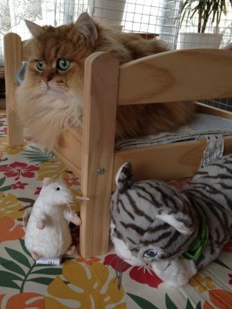 レオンとネズミさんとアメショー猫ちゃん (3)