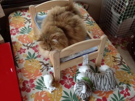 レオンとネズミさんとアメショー猫ちゃん