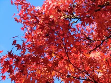 9青空と紅葉