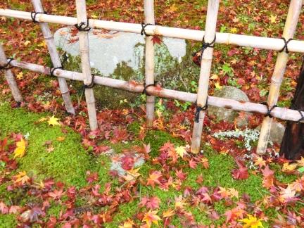 14苔と落ち葉