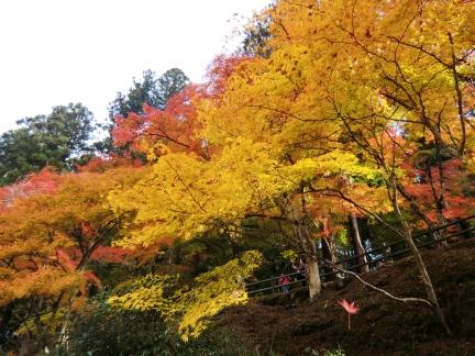 18黄色紅葉