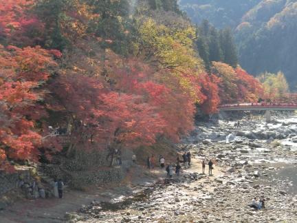 16-1川沿いの紅葉に日が差して