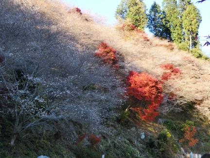 23山頂まで桜と紅葉