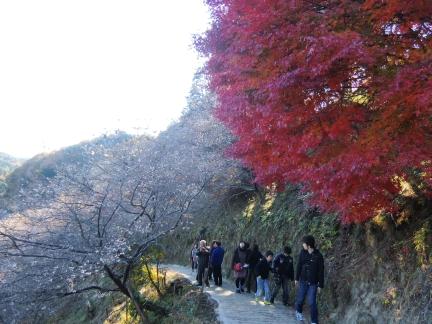 28-1川見四季桜の里