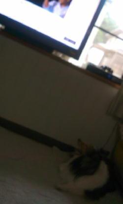 dvd&chiro
