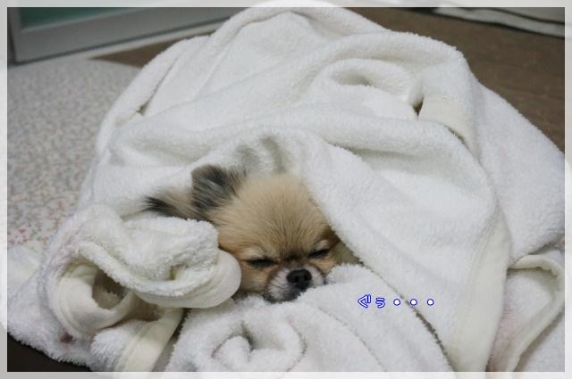もふもふ毛布で2 14-11