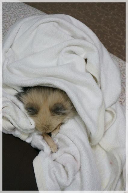 もふもふ毛布で8 14-11