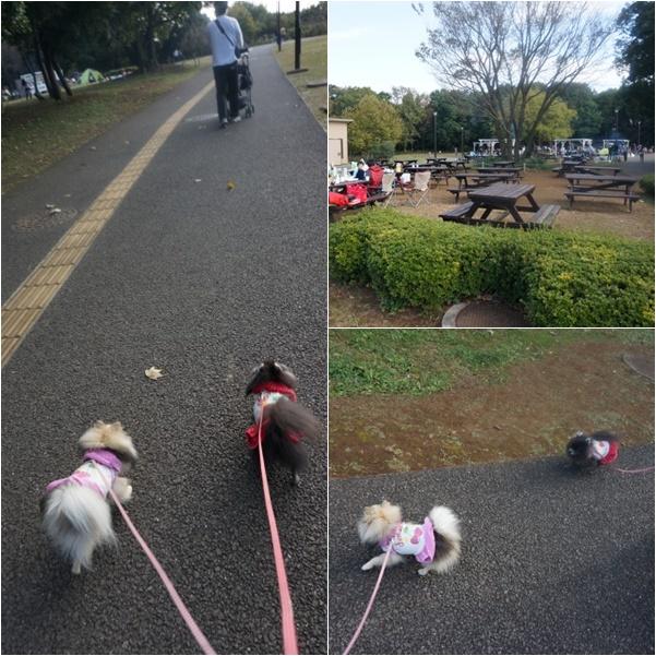 公園散歩8 14-12