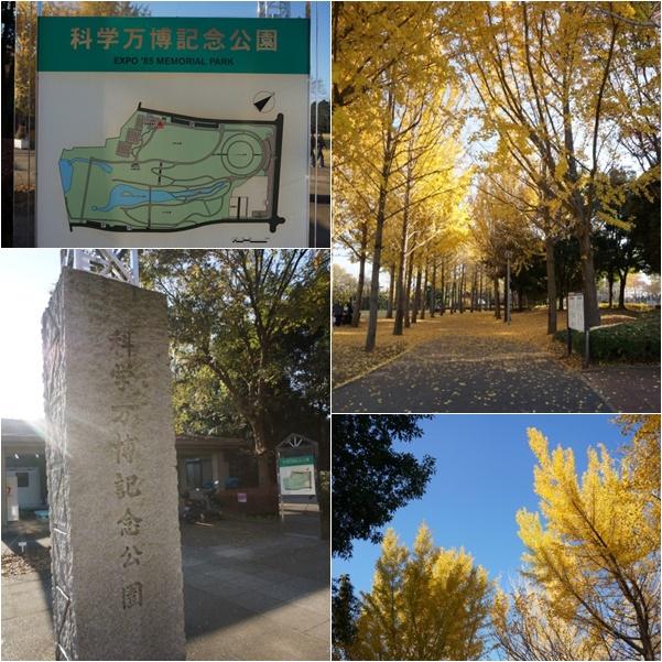 科学万博記念公園3 14-12
