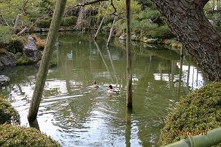 平安神宮の池