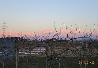 りんご園から残照を写す