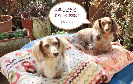 2013Dec31blog2.jpg
