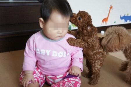 子犬 005