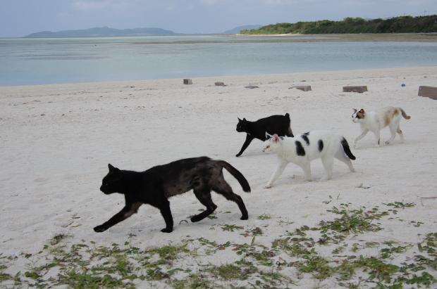猫旅~南の島2~