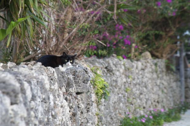 猫旅~南の島5~