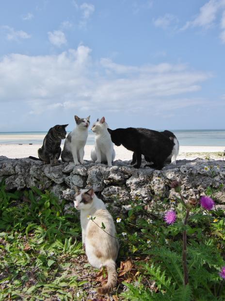 猫旅~南の島~