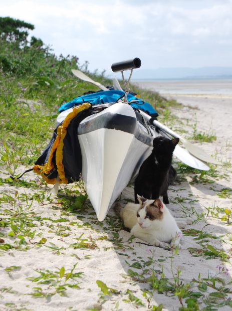猫旅~南の島3~