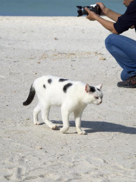 猫旅~南の島4~