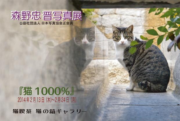猫1000