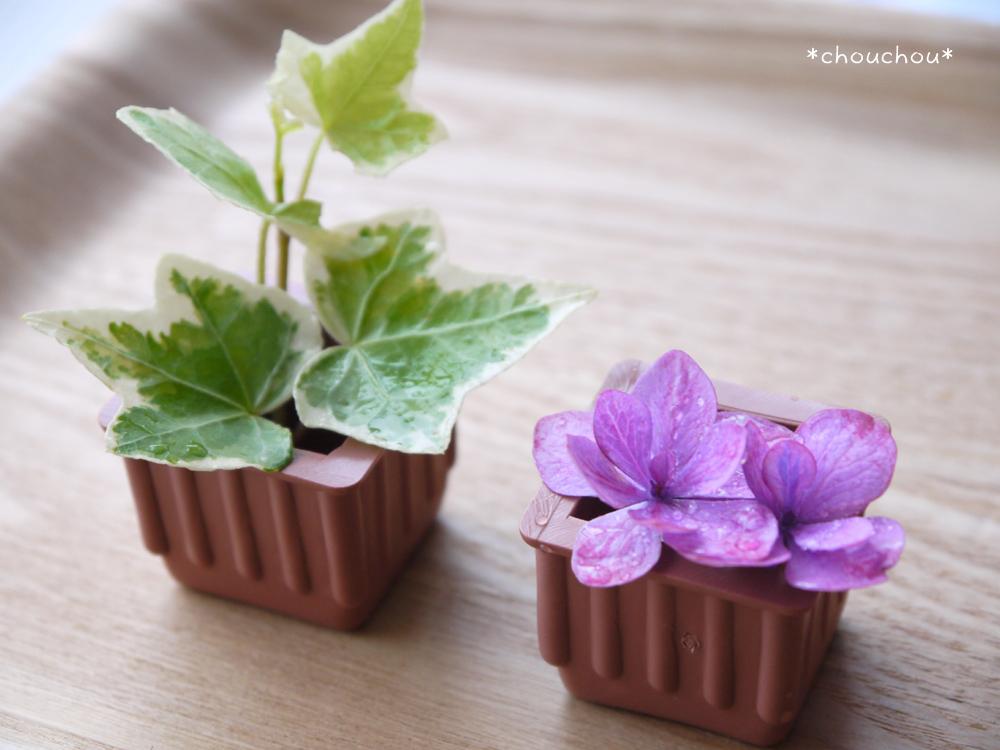アイビー 紫陽花