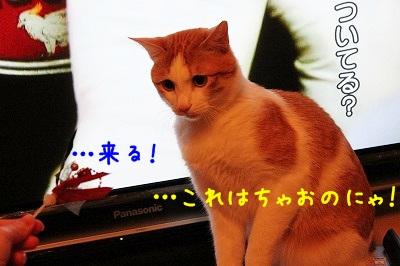 IMG_0941.jpg