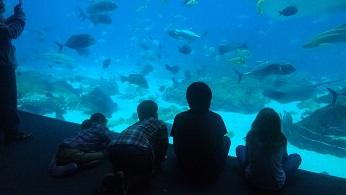 4日水族館ー3