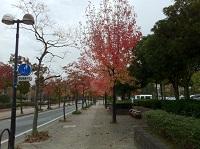 kouyou_20121112160736.jpg