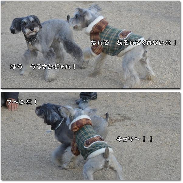kyuricoco2 - コピー