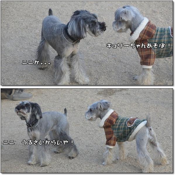 kyuricoco - コピー