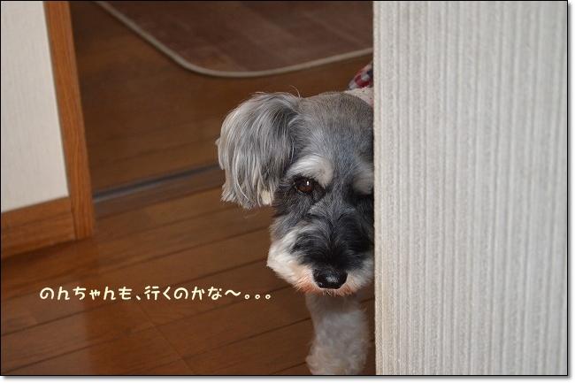 coconon_20120909_07474.jpg