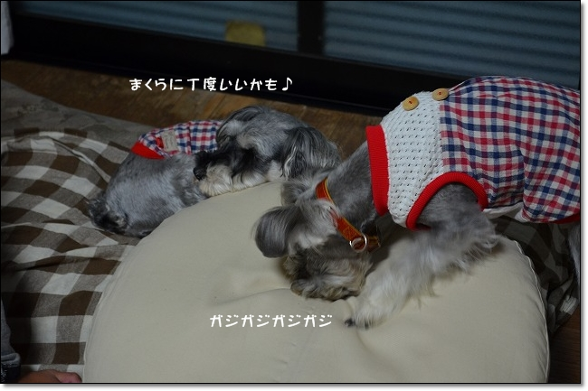 coconon_20121014_08879.jpg