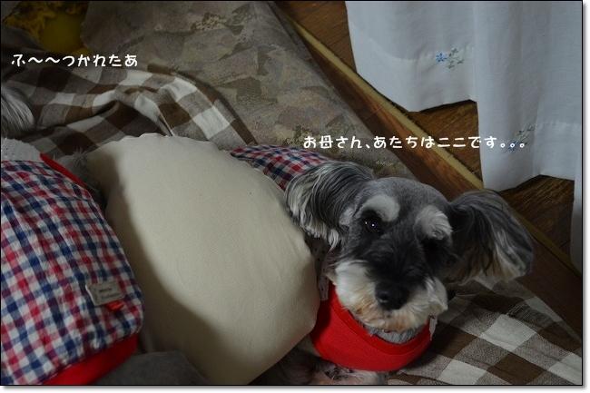coconon_20121014_08882.jpg