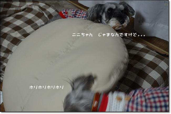 coconon_20121014_08883.jpg