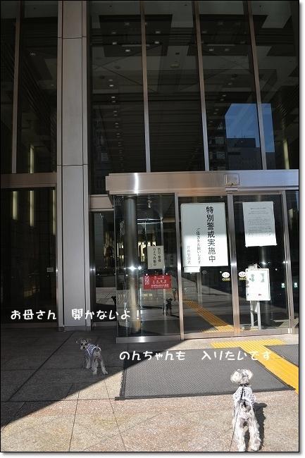 coconon_20121021_09248.jpg