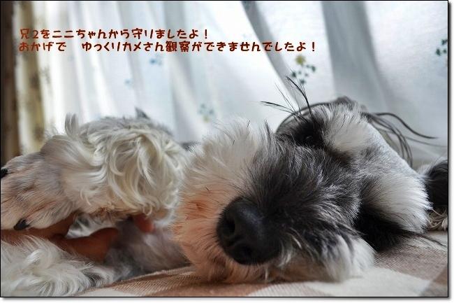 coconon_20121022_09268_20121024074243.jpg