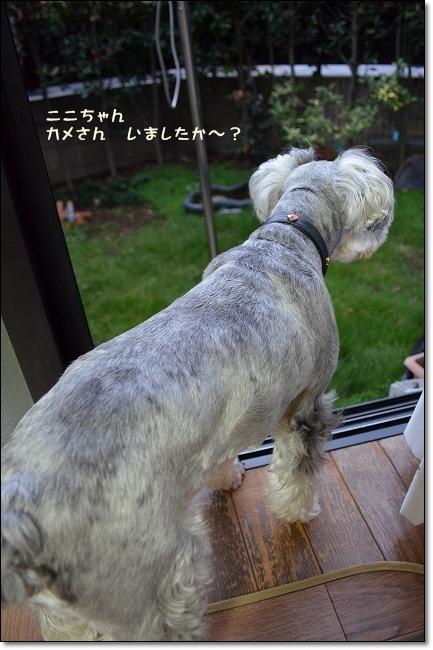 coconon_20121023_09274.jpg