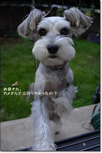coconon_20121023_09276.jpg