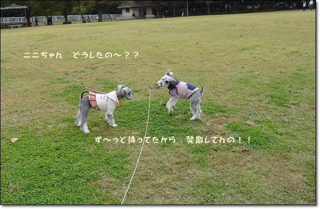 coconon_20121031_09497.jpg