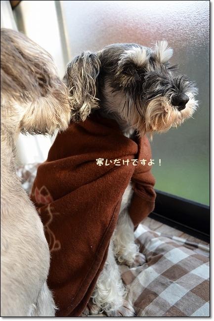coconon_20121031_09525.jpg