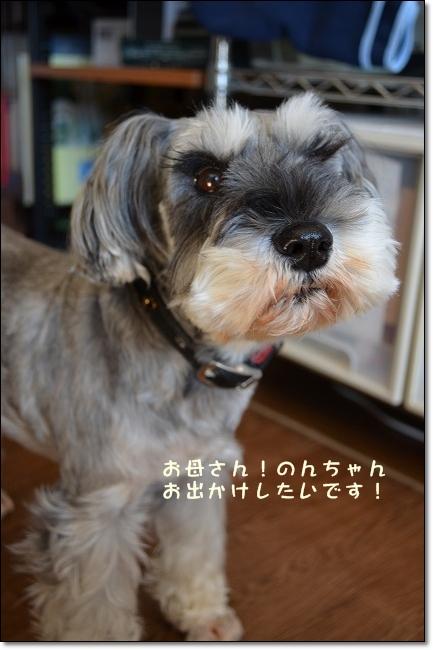 coconon_20121108_09706.jpg